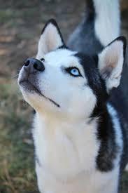 best 25 the breed ideas on pinterest what is breeding cute