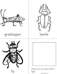 235 best insects study images on pinterest insects teaching