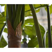 tronc d arbre artificiel monstera artificiel deluxe x5 180 cm maxifleur plantes artificielles