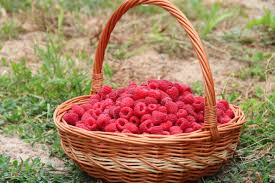 fruit basket free picture raspberries summer fruit basket green grass