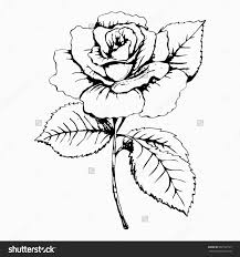 flower rose sketch painting hand drawing white bud petals save to