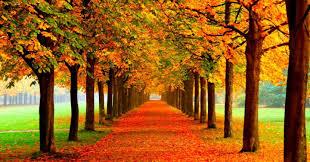 imagenes de otoño para fondo de escritorio los mejores fondos de pantalla del otoño para tu móvil