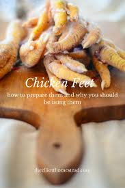 Backyard Chicken Com 632 Best Backyard Chickens U0026 Ducks Images On Pinterest Raising