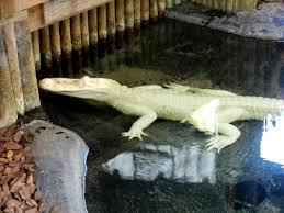 bartender resume template australia zoo crocodile feeding videos tkronaboat blog