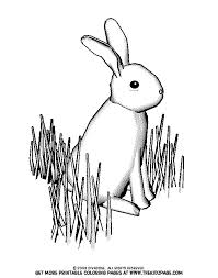 bunny grass free coloring pages kids printable