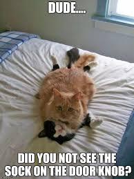 Sock Meme - funny cats imgflip