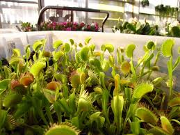 fairhill native plants carnivorous plants tree identification and help for old photos