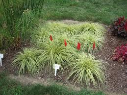 fresh free landscaping grasses australia 9245
