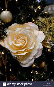 White Christmas Flower Decorations by Large White Rose Flower Decoration In A Christmas Tree Stock Photo