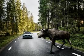 what is the latest volvo commercial about volvo u0027s large animal detection system spots moose deer and hits