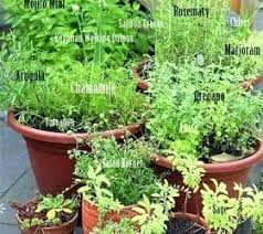 Patio Herb Garden Ideas Container Herb Garden Best Potted Herb Gardens Ideas On Container