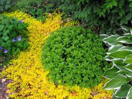 Winter Patio Furniture Covers - garden patio with furniture and golden creeping jenny ground cover