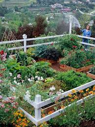 Backyard Kitchen Garden Great Pretty Vegetable Gardens Who Says A Kitchen Garden Cant Be