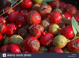 native edible plants australia aboriginal bush food stock photos u0026 aboriginal bush food stock