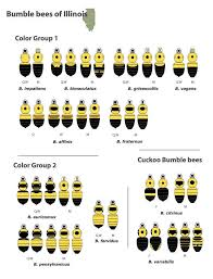 bumble bees illinois color group beespotter university