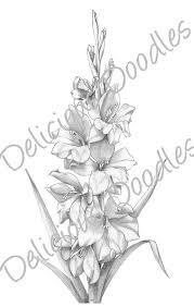 9 best gladiolus tattoo stencils images on pinterest draw