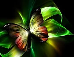 beautiful butterfly on a background stock photo