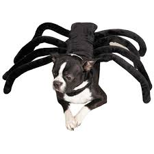 rustic dog halloween costumes buzzfeed birthday ideas dog