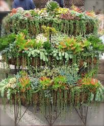 garden beautiful succulents in hanging pots window boxes for