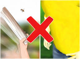 how to treat yourself if you get stung by a bee or wasp 9 steps