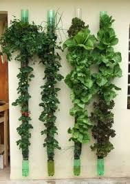 Inside Vegetable Garden by Best 10 Indoor Gardening Ideas On Pinterest Water Plants