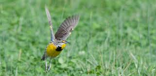 get in on bird blitz fun pledge your support today acres land