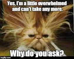 Overwhelmed Memes - yes i m a little overwhelmed and can t take any more why do you