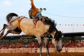 rodeo has roping racing and comedy cecil co fair cecildaily com
