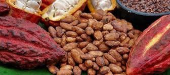 sp cialit africaine cuisine libre expression café cacao sauver les fèves du mal pole