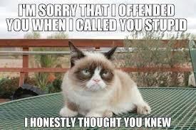 Grumpy Cat Birthday Memes - ideal 20 the funniest grumpy cat memes funny wallpaper site