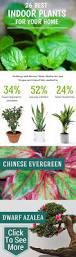 Best Plants For Desk by Desk Plant Air Purifier Decorative Desk Decoration