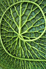 fractal pattern in nature patterns in nature worksheets for all download and share