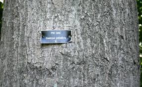 White Oak Tree Bark Know Your Trees Oaks The Georgetown Metropolitan