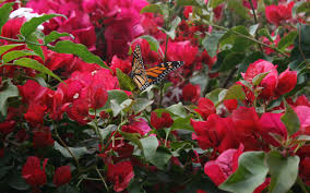 create a backyard habitat for wildlife