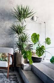 le bureau verte aréca plante verte pour le bureau les plantes dans les bureaux