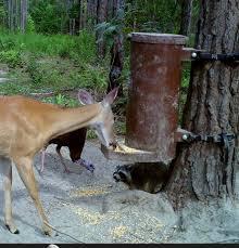 diy deer feeder transform my yard pinterest deer feeders