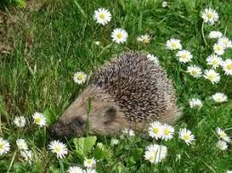 Daisy The Flower - 75 best smell the flowers images on pinterest animals wild