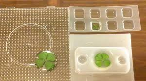 resin crafting encasing four leaf clovers youtube