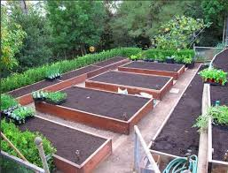 Backyard Garden Layout Planning A Raised Bed Vegetable Garden Yahoo Image Search
