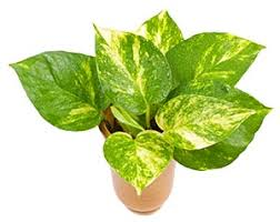 12 most beneficial houseplants