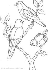 colouring pictures print colour free birds image