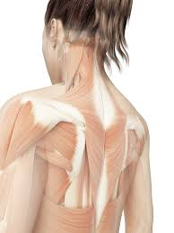 back relief causes and treatment of back