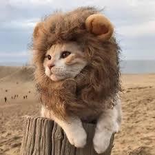 dog lion costume ebay