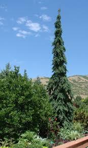 House Landscaping 73 Best Columnar Trees For Landscapes Images On Pinterest Garden