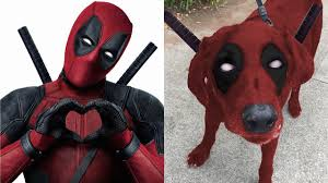 superheroes in real life as dogs youtube