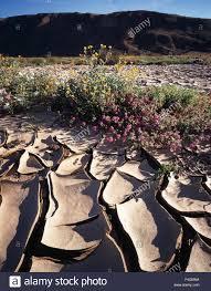 california anza borrego desert state park patterns of cracked
