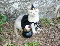 Ferret Costumes Halloween Cuuuute Critters Ferret Animal Pet Costumes
