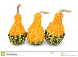four pear shaped ornamental gourds with orange and green stripes