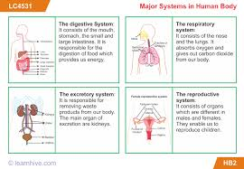 learnhive icse grade 5 science the human body lessons