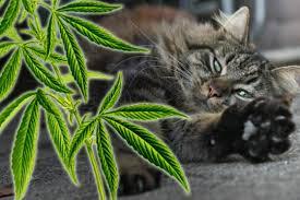 gerüche die katzen nicht mö das große duft spezial was katzen gerne riechen welche gerüche